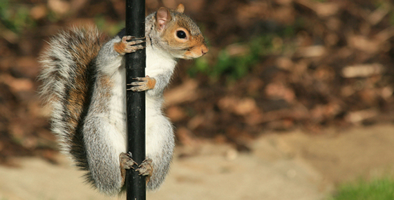 squirrel-1349838-639x430